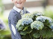 L'hortensia Magical® Four Seasons, belle idée cadeau d'ici