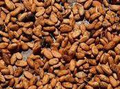 Ghana baisse production cacao pénalise finances ghanéennes