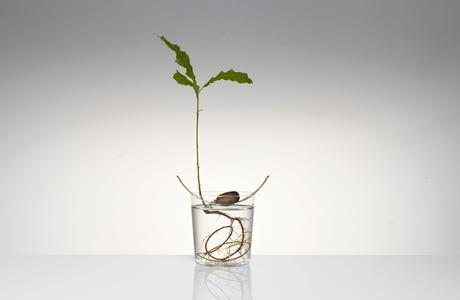 Floating-Forest-Series-by-Michael-Anastassiades-05