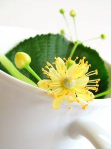 tisane-fleur