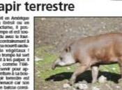 {projet journal} Tapir Terrestre Maki Catta...