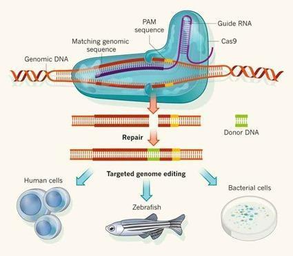Edition de   génome