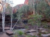 Road trip dans suite Karijini National Park Pinnacles