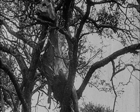 Spielberg-Cheval de guerre-cadavre-Soissons