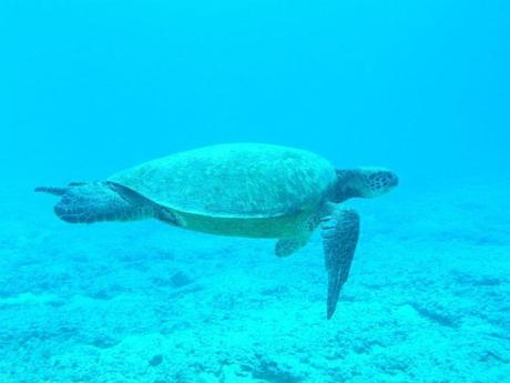 tortue-sous-marine