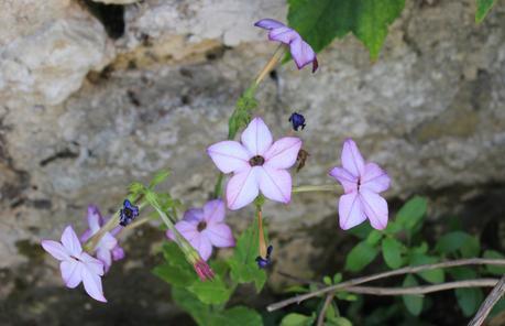 Un feu d'artifice de fleurs à Giverny