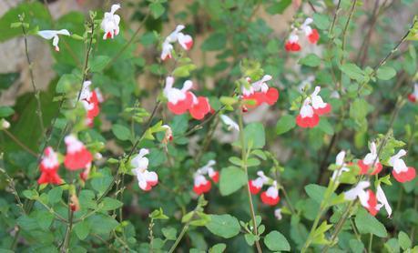 Fleurs des jardins de Giverny