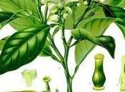 Plantes douceurs