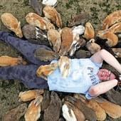Tourists smothered by bunnies in cute stampede on Rabbit Island