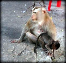 Cambodge : On a découvert Battambang, Prasat Banan et Phnom Sampov