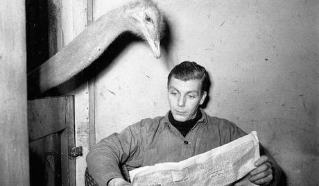Newspaper reading austrich jeu de mots