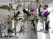 Orchid Stylist Patrick Nadeau