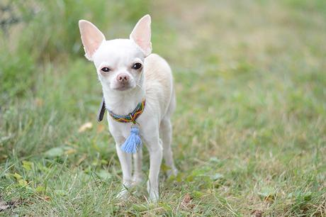 Doggie Flair : Collier moderne et original Maclaud It Dogs