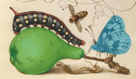 Joris Hoefnagel Model Book of Calligraphy. 1561 - 1562; illumination added 1591 - 1596 _Google_Art_Project detail
