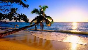 Plage avec palmier