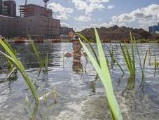 Soil Water, installation artistique éco-conçue nager Londres