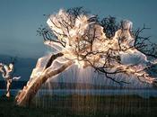 Vitor Schietti illumine nature fait photographies incroyables