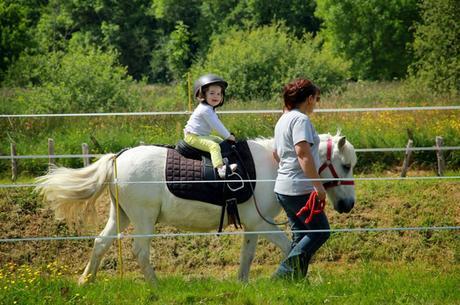 poney_western_pony