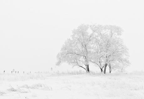 Inspi Pics décembre