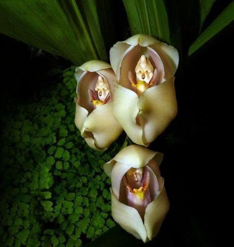 Fleurs étranges et insolites