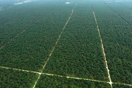 An aerial view shows a palm oil plantation in Indonesia's Jambi province August 5, 2010. Indonesia may propose palm oil plantations be eligible to earn carbon credit under a U.N.-backed scheme aimed at preserving forests, a forestry ministry official said on Monday. Environmentalists have for years expressed concerns over Indonesia's palm oil producers and whether they have cleared forests to expand their plantations. Picture taken on August 5, 2010. REUTERS/Beawiharta (INDONESIA - Tags: BUSINESS ENERGY ENVIRONMENT)
