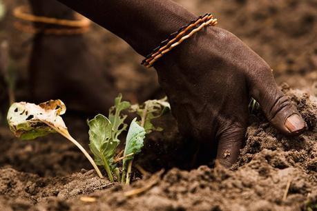 Manifeste pour la sauvegarde des terres agricoles