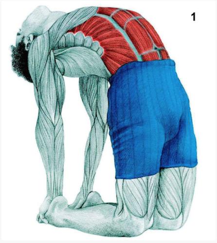 Quels étirements pour quels muscles?