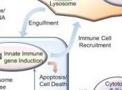CANCER COLORECTAL: Sting, protéine réponse anti-tumorale