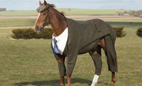 Découvrez le premier costume 3 pièces pour cheval de course