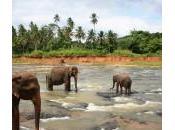 Voyage jours Lanka