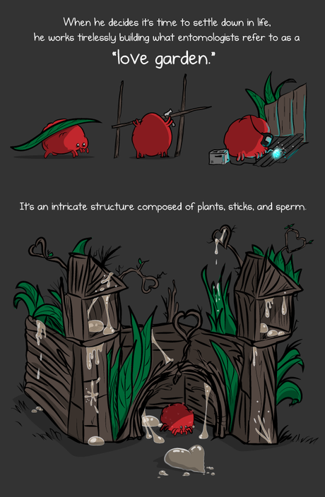 Red Velvet Mite, The Oatmeal