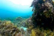 Plongée à Canal Rocks vers Yallingup