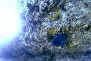 Le WA Blue Devil Plongée à Canal Rocks vers Yallingup