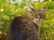 jardins chats