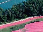 EVASION îles roses Miami