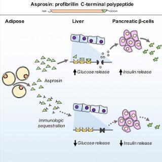 hormone protéique