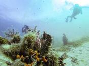 Première plongée solo Trois hippocampes poissons scorpions