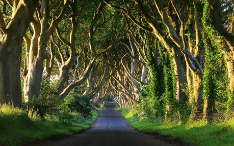 Kingsroad – Dark Hedges, Balloney, Irlande du Nord