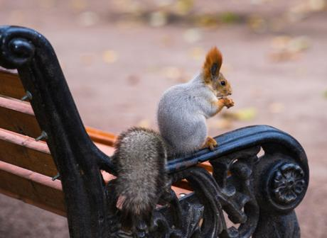 a-squirrel-park-640x468
