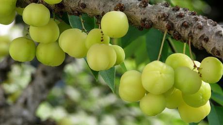 Les plantes ayurvédiques : secrets de beauté des indiennes