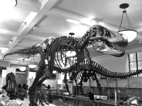 Visiter l'American Museum of Natural History New York