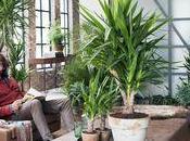 plantes vertes deviennent très tendance cette année