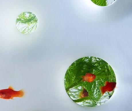 haruka-misawa-waterscape-fish-aquariums-07-818x690-768x648