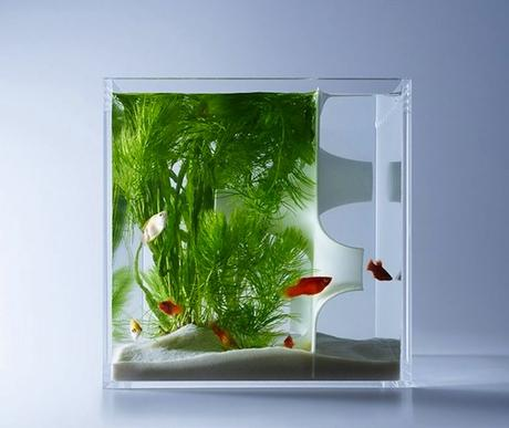 haruka-misawa-waterscape-fish-aquariums-02-818x690-768x648
