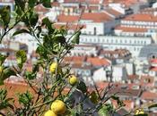semaine Lisbonne