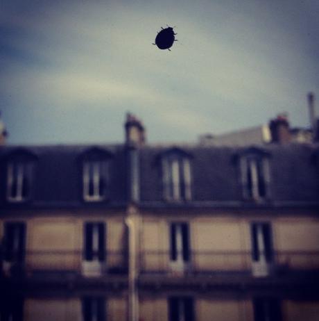 La vue d'en face derrière une petite demoiselle  (c) D'une île à Paris