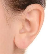 image-oreille
