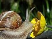 Vive escargots