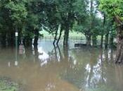 Inondations verdure