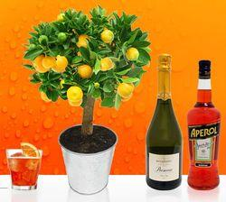 Interflora calamondin